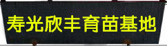 寿光蔬菜苗,强雌黄瓜苗,羊角椒苗,西葫芦苗,冬瓜苗,丝瓜苗,甘蓝苗,西兰花苗,有机菜花苗,芹菜苗,育苗厂